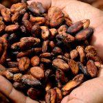 Vyrobiť kakao je podľa Naty hotová veda