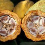 Ako chutí kakaový bôb opisuje Chuť od Naty