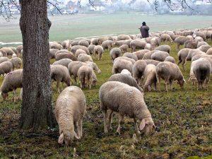 Tipy na recepty s ovčím mäsom na webe chutodnaty.sk